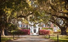 The Boone Hall Plantation is one of the country's oldest working farms. The plantation was founded i... - Planetpix/Alamy