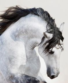 The horse is a universal symbol of freedom without restraint. The horse serves man, but can never be fully tamed by him.