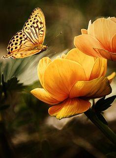 Секрет не в том, чтобы гоняться за бабочками... Ухаживай за своим садом - и они сами к тебе прилетят