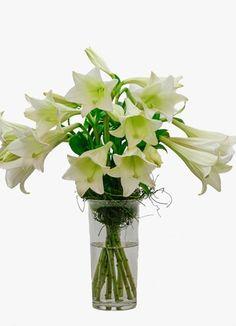 St Joseph Lilly Vase A Simple Generous St Joseph Lilies Bouquet Wonderful Flowers, Weird And Wonderful, Lily Bouquet, Bouquets, Sympathy Flowers, Colour Pallete, St Joseph, Flower Arrangements, Glass Vase