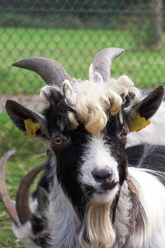 It actually looks like someone curled his hair! Or is that natural? www.thesmokinggoat.com