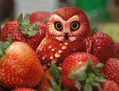 owl carved from strawberry!