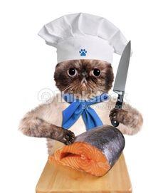 Photo : Cat chef