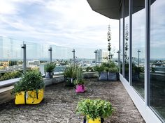 Big Urban planters for balcony #TheGreenBag Big Garden, Herb Garden, Big Plants, Potted Plants, Urban Planters, Green Bag, Flower Beds, Bloom, Herbs