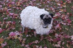 Koko the sheep | Flickr - Photo Sharing!. How adorable can you get?