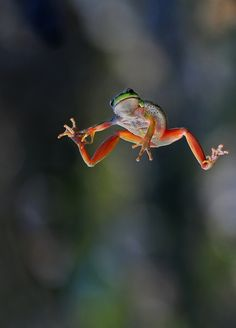 Jumping frog via Bibeline Designs