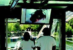 Gracias a las cámaras subacuáticas podemos interactuar con los buzos y descubrir toda la vida que hay bajo las aguas del Lago de Sanabria Douro, Fauna, Fair Grounds, Travel, Aquatic Ecosystem, Cruise, Parks, Life, Voyage