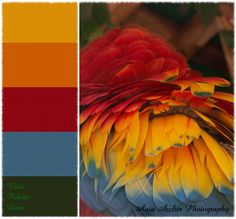 Ania Archer Photography, Color Palette