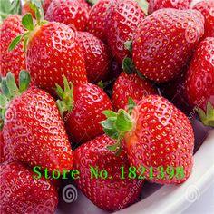 500 semillas / paquete, súper gigante fresa fruta de semilla de Apple tamaño 100% verdadero variedad no fake envío gratis