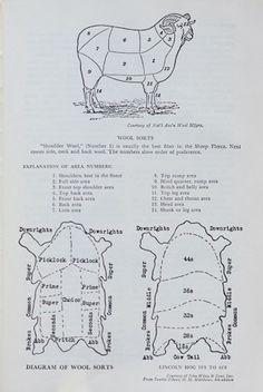 Diagram of wool sorts - from http://knit.fm/ ...... the incredibly educating podcasts on all things knitting related by Pam Allen and Hannah Fettig ........ Image from: Modern Textile Dictionary by George Linton, 1954