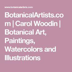 BotanicalArtists.com | Carol Woodin | Botanical Art, Paintings, Watercolors and Illustrations