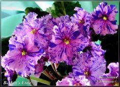 B-Man's Etna Крупные яркие гофрированные анютки на крепких цветоносах.Чем старше розетка, тем ярче выражено фэнтези.