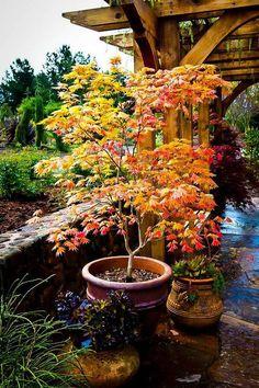 Garden Shrubs, Garden Trees, Garden Pots, Garden Coffee, Veg Garden, Garden Oasis, Water Garden, Shade Garden, Small Japanese Garden