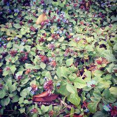 Tutta la natura che posso... my shot  #Livorno #Toscana #Tuscany #Italy #Italia #instaitalian #instaitalia #igers #igtoscana #igersoftheday #igerstoscana #natura #nature #garden #giardino #myshot #igerslivorno #autunno #autumn #pioggia #rain