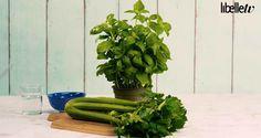Zo gemaakt: je eigen mini-moestuin van overgebleven groenten