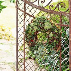 DIY Plant a Living Wreath: Tough, drought-tolerant succulents are a perfect way dress up gates, fences, walls, and doors.