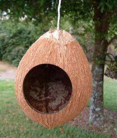 Como fazer você mesmo: Como fazer uma casa de passarinho com um coco