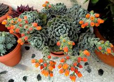Purple Plants, Easy Drawings, Trees To Plant, Stranger Things, Cactus, Succulents, Seeds, Gardening, Google