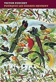 """""""Pourquoi les oiseaux meurent..."""" de Victor Pouchet"""