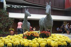 #gardensbythebay #singapore