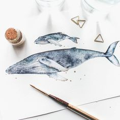 Illustrator Canan Esen paints delicate watercolor illustrations that capture the elegant movements of majestic whales and other marine life.