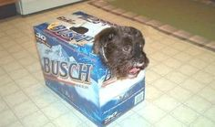 Redneck Dog Carrier- This is what Jeff would carry Cooper in as a dog carrier. and he would also continue to have beer inside it. Cute Dogs And Puppies, I Love Dogs, Doggies, Dog Pictures, Cute Pictures, Funny Animals, Cute Animals, Funniest Animals, Animal Fun