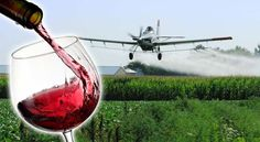 Roundup's Toxic Chemical Glyphosate, Found in 100% of California Wines Tested