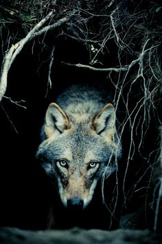 Shadow Within By Christian Houge | Christian Houge explores our relationship to the wolf with visceral photographs, inviting us to reconsider our fears and instincts as humans.