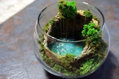 Miniature hidden cave pool (cenote) style terrarium inspired by cenote Ik-Kil, Yucatan, Mexico