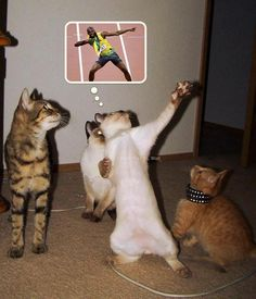 Usain Bolt imitation #cat #funny