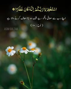 Beautiful Quran Quotes, Allah Love, Plants, Plant, Planets