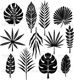 depositphotos_2574263-Tropical-leaf.jpg (940×1024)