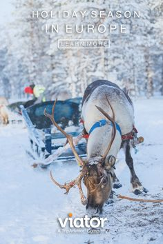 Embrace the magic of Christmas on this family-friendly Lapland Santa Claus Village experience including sleigh-ride and lunch from Rovaniemi! Christmas Scenes, Christmas Art, Vintage Christmas, White Christmas, Christmas Ideas, Europe Tourism, Santa Claus Village, Christmas Cruises, Animal Action