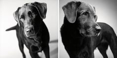 Timeless Love: Photos of Dogs as They Age