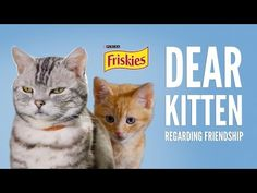 Tastefully Offensive: An Adult Cat Explains the Rules of Friendship to a Kitten in Latest 'Dear Kitten' Friskies Ad