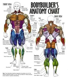 The Fastest Body Building Secrets... Have a look at this great website - weightloss-v9012j...