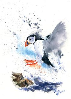 How to Paint a Puffin in Watercolour with Rachel McNaughton Visit our art'shop here . Shipping free and quick Art Aquarelle, Watercolor Animals, Watercolor Illustration, Watercolour Painting, Watercolor Flowers, Simple Watercolor, Watercolor Landscape, Tattoo Watercolor, Watercolor Background