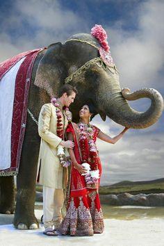 Indian wedding - bride and groom with elephant