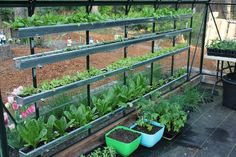 Greenhouse-Gutters-grow-food-in-gutters. From the amazing blog one hundred dollars a month (that's all the $ she feeds her family with)