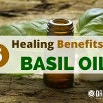 The protective effects basil has for garden tomatoes are mirrored in the antimicrobial, anti-inflammatory protective benefits of basil essential oil. Basil Essential Oil, Doterra Essential Oils, Essential Oil Blends, Benefits Of Basil, Oil Benefits, Young Living Oils, Young Living Essential Oils, Uses For Basil, Arthritis