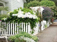 Abundance of greenery and white hydrangeas