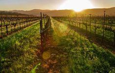 Napa Valley, California - Wine