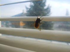 Little bee in my class room...