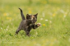 discover the world... by rhtierfoto #animals #animal #pet #pets #animales #animallovers #photooftheday #amazing #picoftheday