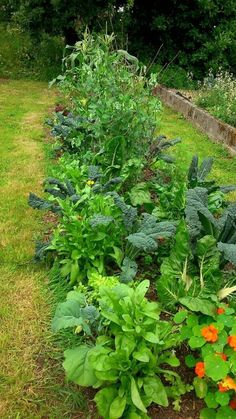 Most people interested in practicing permaculture are doing so in a domestic situation – a house or apartment with a garden. Permaculture works brilliantly on a small scale, so permaculture gardening methods are ideal for these situations. Here are some distinctive permaculture gardening methods to make your garden healthy, low-maintenance and highly productive.