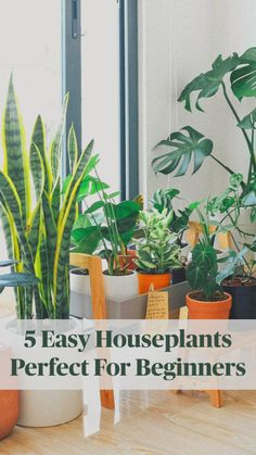 Cool 5 Easy Houseplants Perfect For Beginners