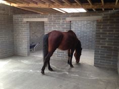 Erik the Irish draft inspecting his new stable block