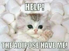 Help! The adipose have me!