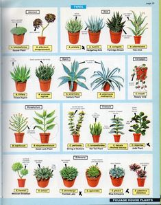 Succulents page from 'The house plant expert' by Dr. Hessayon (published in I'm into Euphorbias. Dig that whole family. Types Of Succulents, Growing Succulents, Types Of Plants, Cacti And Succulents, Planting Succulents, Planting Flowers, Cactus Planta, Cactus Y Suculentas, Succulent Gardening