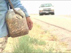 North Texas residents bugging out over locust harvest - KLTV.com-Tyler, Longview, Jacksonville, Texas.